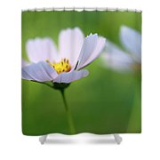 Cosmos In A Field Shower Curtain