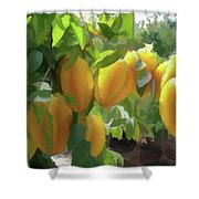Costa Rica Star Fruit Known As Carambola Shower Curtain