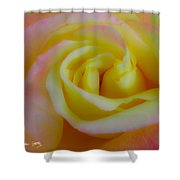 Cotton Candy Roses Shower Curtain