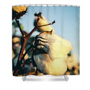 Cotton Field 13 Shower Curtain