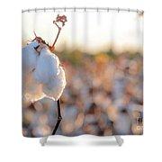 Cotton Field 14 Shower Curtain