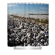 Cotton Field Shower Curtain