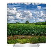 Cotton Fields Of Sc Shower Curtain