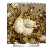 Cotton Sepia Shower Curtain