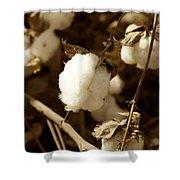 Cotton Sepia2 Shower Curtain