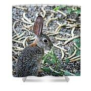 Cottontail Rabbit 4320-080917-1 Shower Curtain