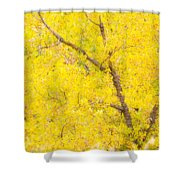 Cottonwood Colors  Shower Curtain