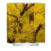 Cottonwood Fall Foliage Colors Abstract Shower Curtain