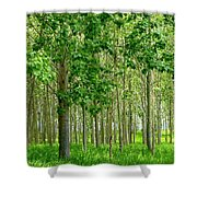 Cottonwood Grove Shower Curtain by Will Borden