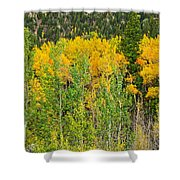 Cottonwood Pass Gold Viii Shower Curtain