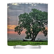 Cottonwood Pasture 2 Shower Curtain