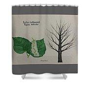 Cottonwood Tree Id Shower Curtain