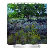 Cottonwood Tree In Old Field Shower Curtain