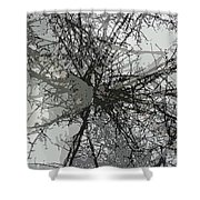 Cottonwood Tree Montage Shower Curtain