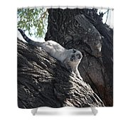 Cougar Immitation Shower Curtain