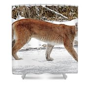Cougar On The Prowl Shower Curtain