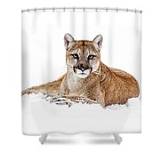 Cougar On White Shower Curtain