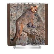 Cougar Rocks, Southwest Mountain Lion Shower Curtain