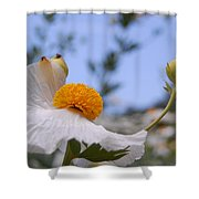 Coulter's Poppy 4 Shower Curtain