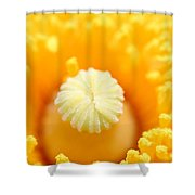 Coulter's Poppy 5 Shower Curtain