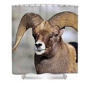 Country Boy Ram Shower Curtain