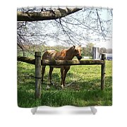 Country Shower Curtain