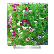 Country Cosmos Shower Curtain