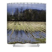 Country Living Eh Shower Curtain
