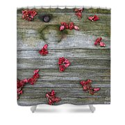 Country Seedling Shower Curtain