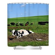 Countryside Cows Shower Curtain