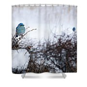 Couple Chilly Bluebirds Shower Curtain