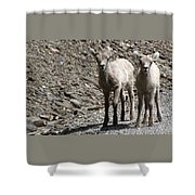 Couple Of Cuties- Baby Bighorn Shower Curtain