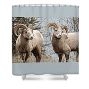 Couple Of Rams- Banff National Park Shower Curtain