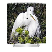 Courting Shower Curtain
