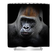 Cousin, No. 43 Shower Curtain