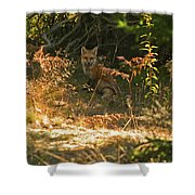 Cover Shot Shower Curtain