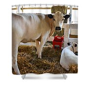Cow And Little Calf Shower Curtain