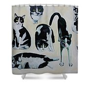 Cow Cats Shower Curtain