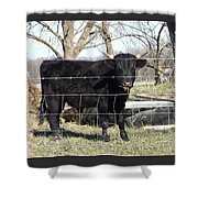 Cow Eating  Shower Curtain