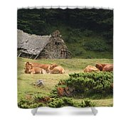 Cow Family Pastoral Shower Curtain