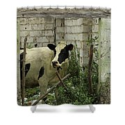 Cow In A Building Shower Curtain