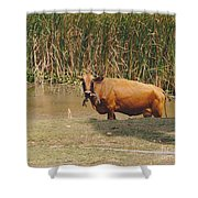 Cow In The Field Shower Curtain