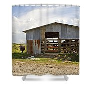 Cow In The Pasture Shower Curtain