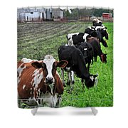 Cow Line Up Shower Curtain