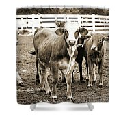 Cow Me  Shower Curtain