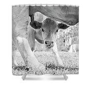 Cow Milk Shower Curtain