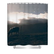 Cow Near The Road Shower Curtain