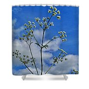 Cow Parsley Blossoms Shower Curtain