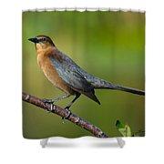Cowbird Shower Curtain