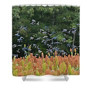 Cowbirds In Flight Over Milo Fields In Shiloh National Military Park Shower Curtain